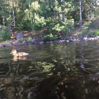 Kanutour in Schweden_164